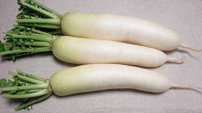 野菜 大根